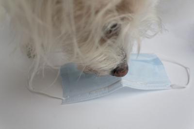 Dog sniffing mask