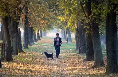 LIFE-SELF-WALKINGDOG-DMT