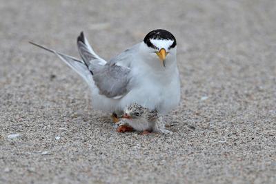 US-NEWS-ENV-FLA-BEACH-SEABIRDS-4-FL
