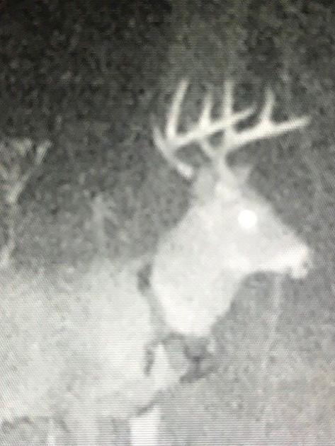 UNH research records longest-ever deer distance