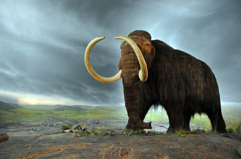 Woolly mammoth replica