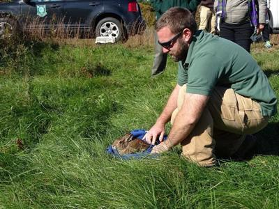New Hampshire Fish and Game biological technician Brett Ferry releases rabbit