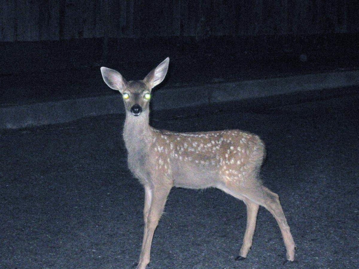 What does deer in the headlights mean