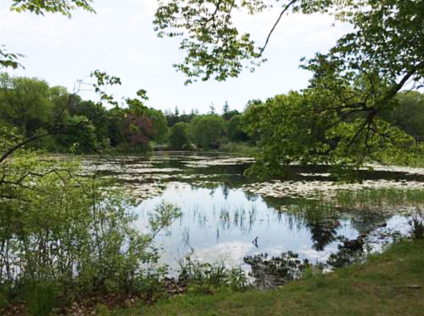 Durham's Mill Pond