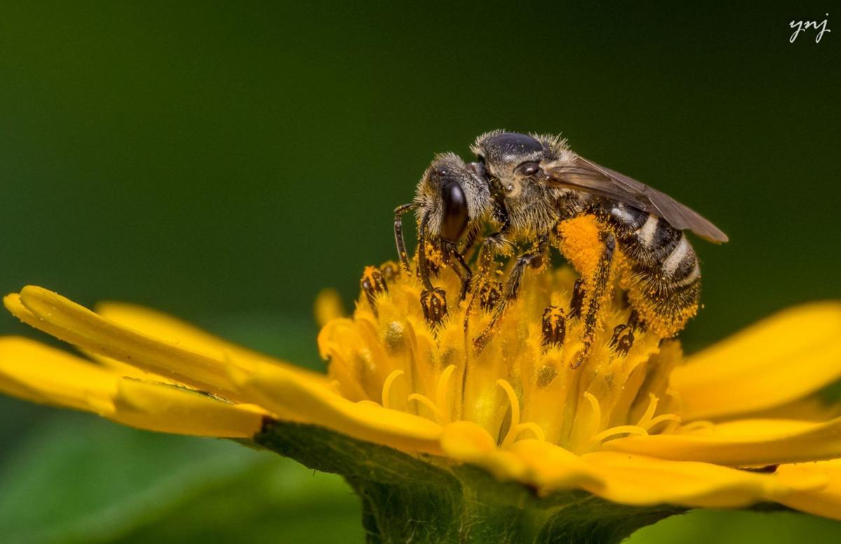 Bees on the decline