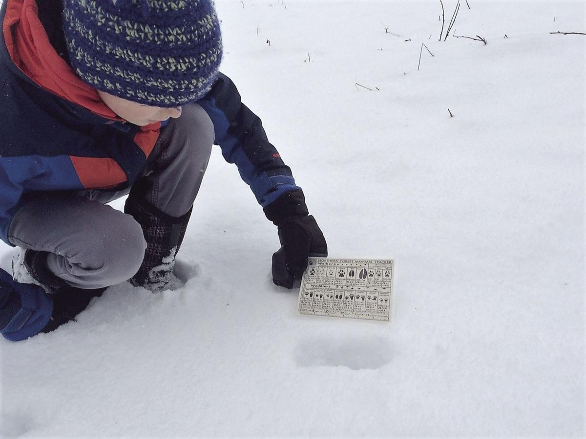 Winter Notes: A little snow cover makes it easier to be an amateur wildlife detective