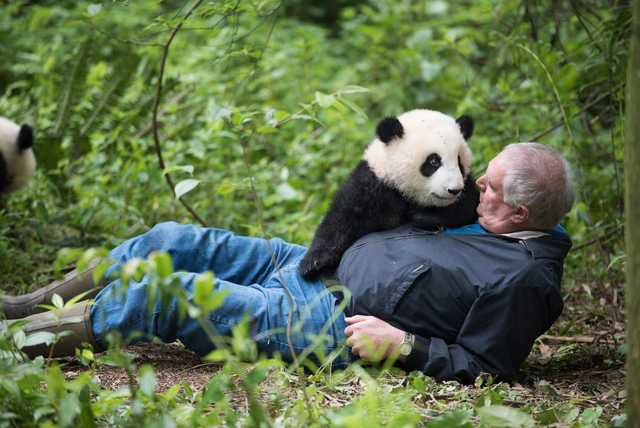 Chinese bears put NH naturalist, the Granite State in the spotlight