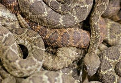 Snake bite venom cost