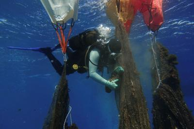 A volunteer diver of the environmental group Aegean Rebreath uses balloons to lift ghost nets from the bottom of the sea, off the island of Salamina