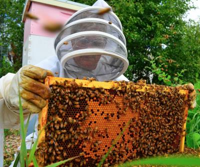 NH Beekeeper of the Year