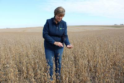 FILE PHOTO: Soybean farmer Pat Swanson examines her soybean crops in Ottumwa, Iowa