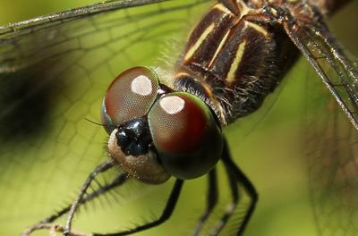 Getting 'Up Close and Personal' with a dragonfly