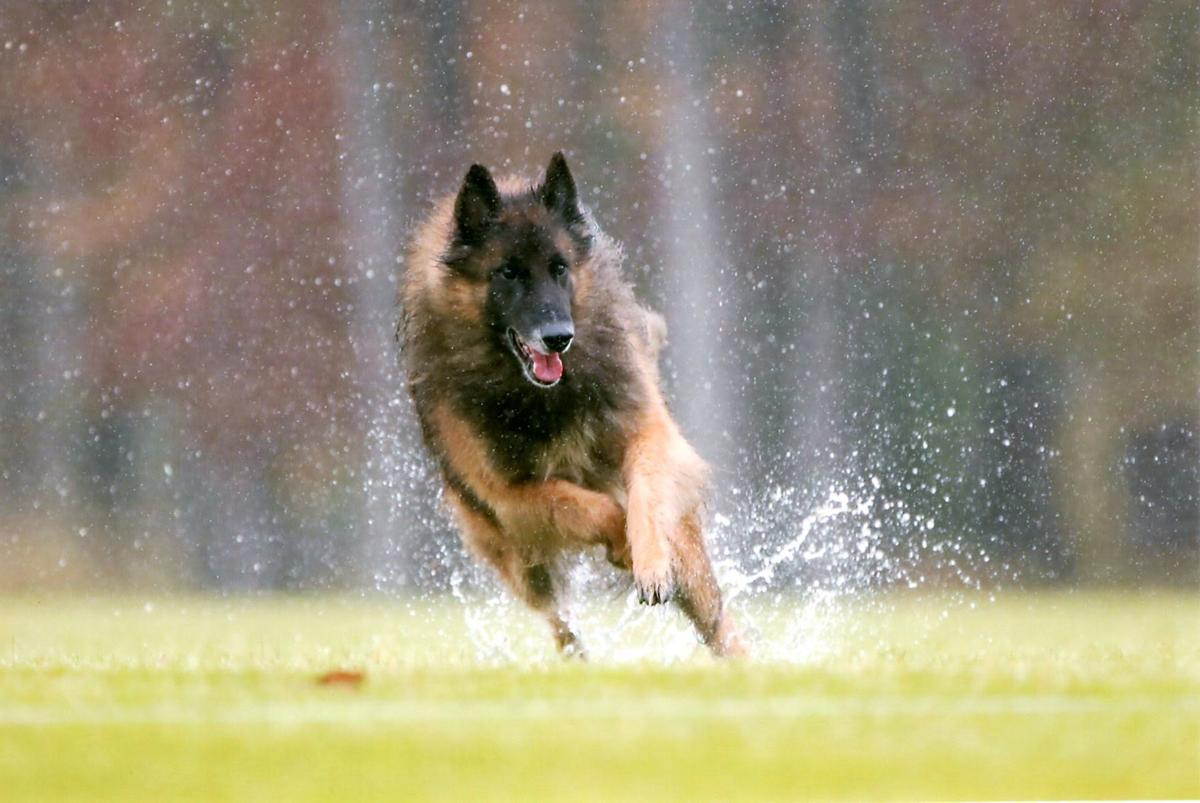 Photo: 190210-news-dogs