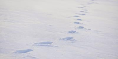 Footprints in the snow lead to an emotional rescue