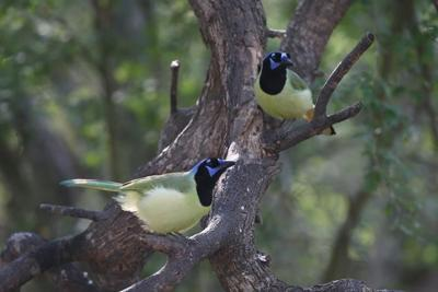 Nature Talks - pic1