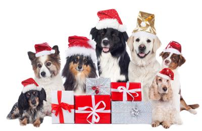 Holiday gifts for pets and pet lovers alike