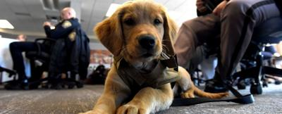 Comfort and joy: Police departments enlist canine counselors