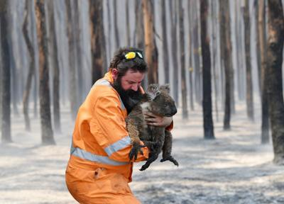Adelaide wildlife rescuer Simon Adamczyk is seen with a koala rescued at a burning forest near Cape Borda on Kangaroo Island