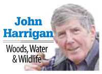 John Harrigan's Woods, Water & Wildlife: Days getting longer, so are the thoughts