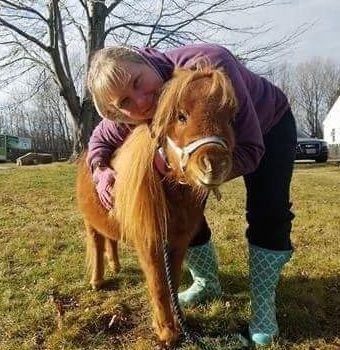 Buddy the mini horse at Candia farmstand