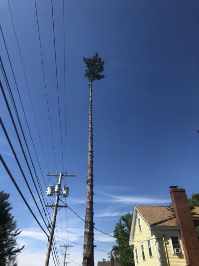 Kingston 'palm tree' has people wondering if they're really in Miami