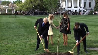 Tree from Macron