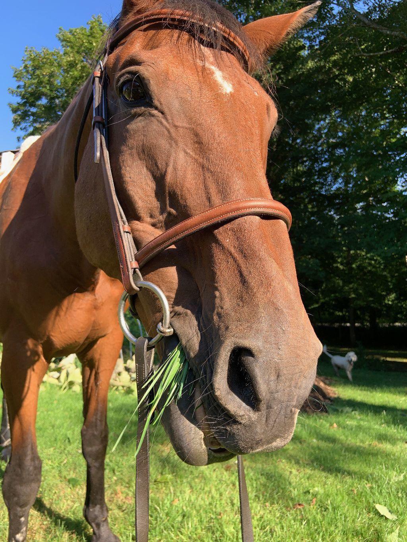 Leo the horse