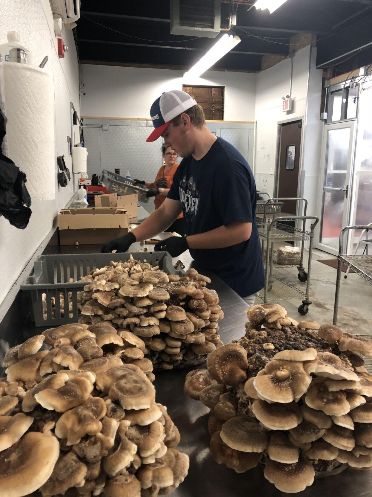 Preparing shiitake mushrooms