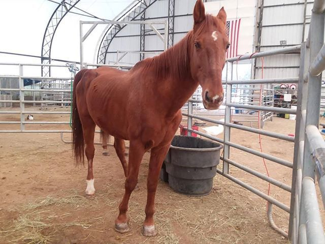 New charge in Langdon horse sanctuary abuse case