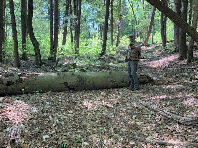 Nature trail planned for Slim Baker Area in Bristol