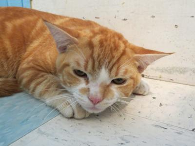 Claremont Cat rescued from beating