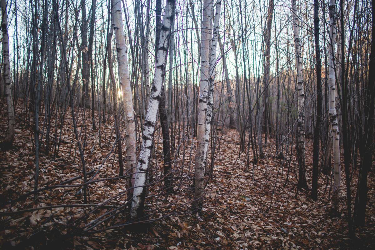 Bark Photosynthesis
