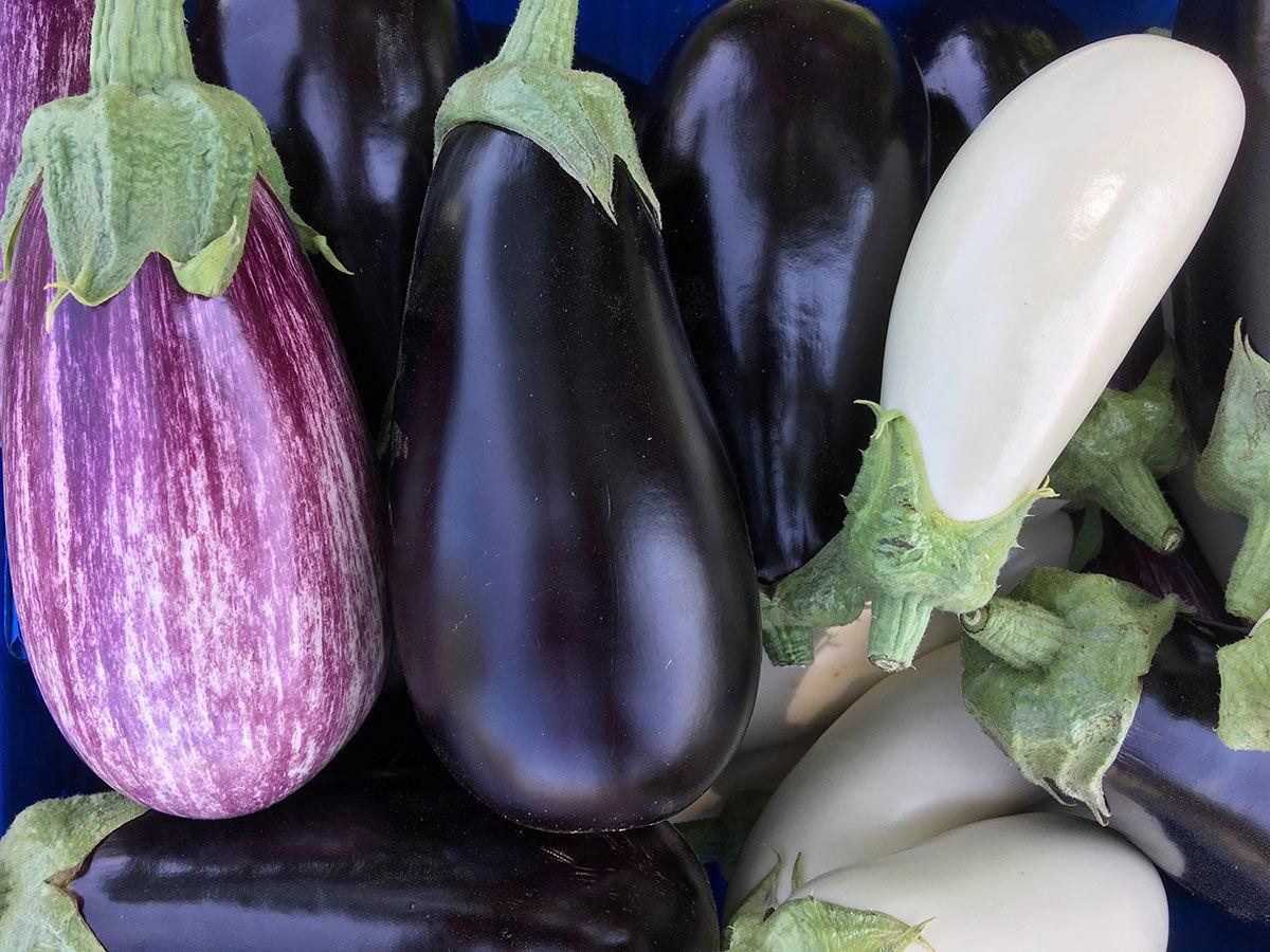 UNH eggplant research