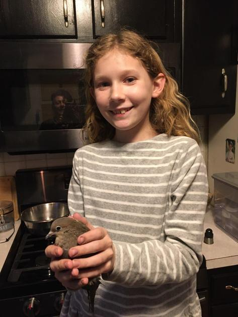 Londonderry woman fighting to keep wounded mourning dove; Fish and Game says it's illegal