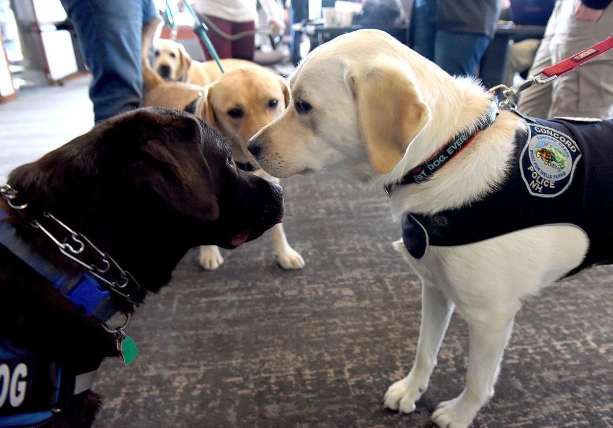 Comfort dogs - dog trio