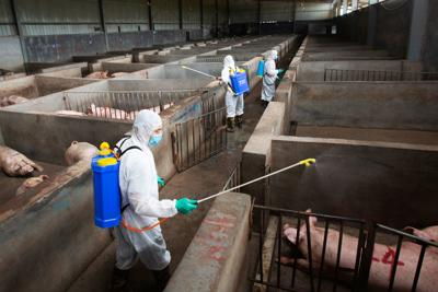 Local husbandry and veterinary bureau workers disinfect a pig farm
