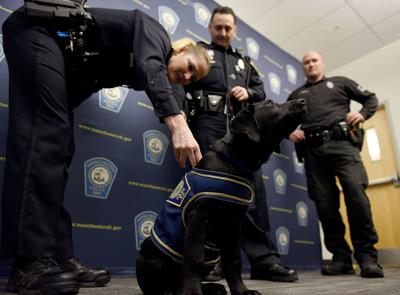 MPD comfort dog now has name