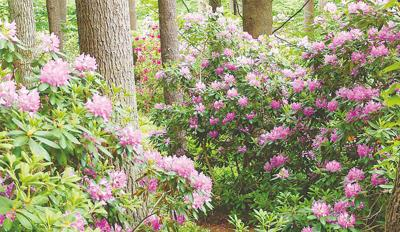 Find great gardens in new calendar