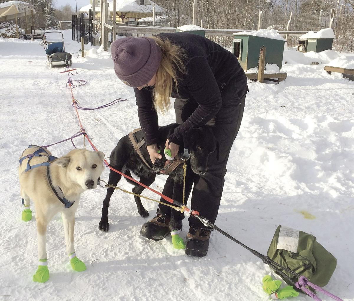 Winter Notes: These eager canines can't wait to take visitors on a dogsled tour