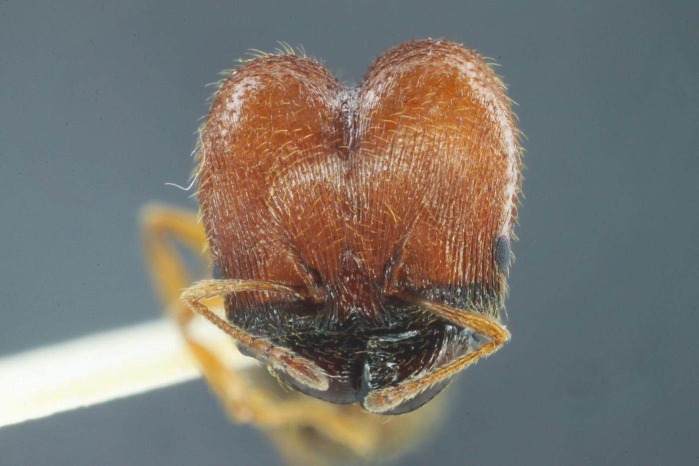210404-lif-ant-head-