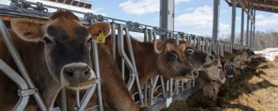 Organic Dairy Research Farm