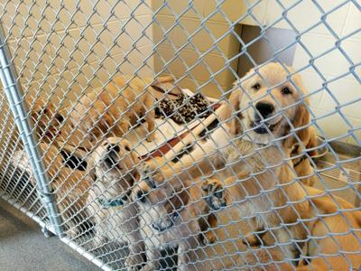 Rescued dogs at Nashua shelter