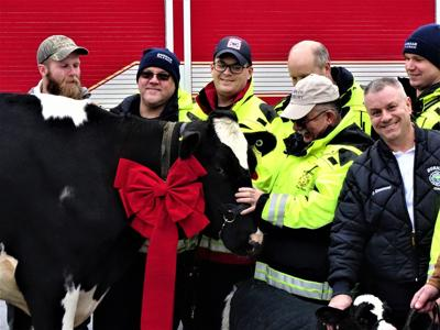 Reunion for UNH's Ruby the cow and the firefighters who saved her