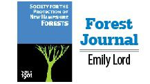 Emily Lord's Forest Journal: Remembering Hurricane of 1938, and forecasting in the future