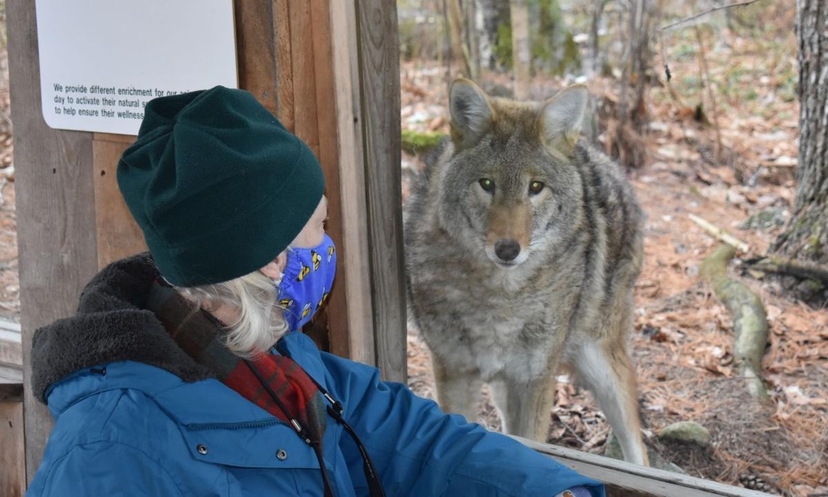 Margaret Gillespie at Squam Lakes Science Center