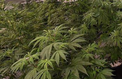 Senate panel rejects expanding medical marijuana