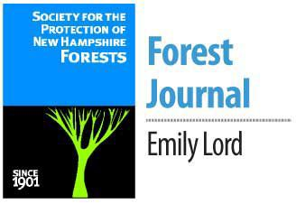 Forest Journal-Lord