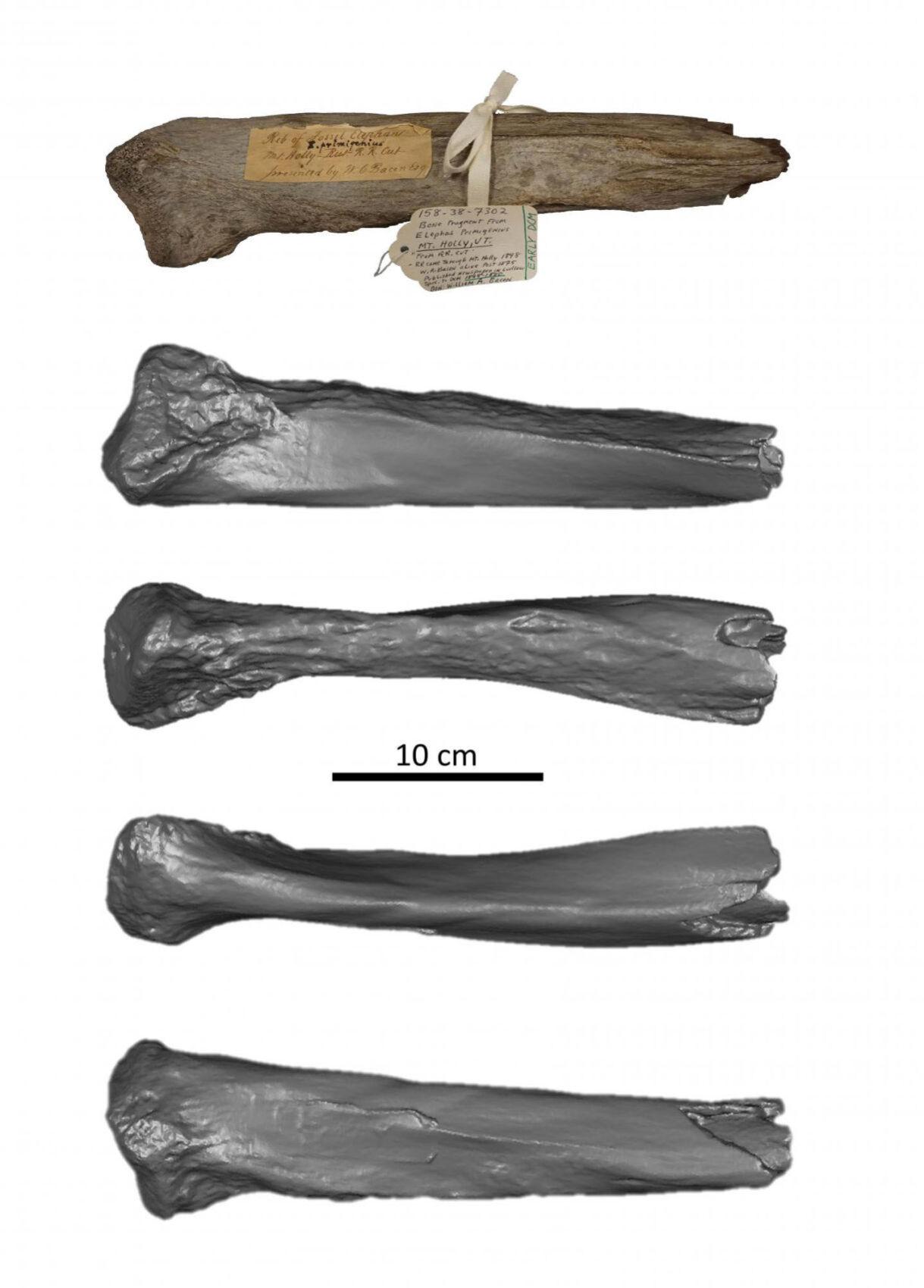 Mammoth rib fragment