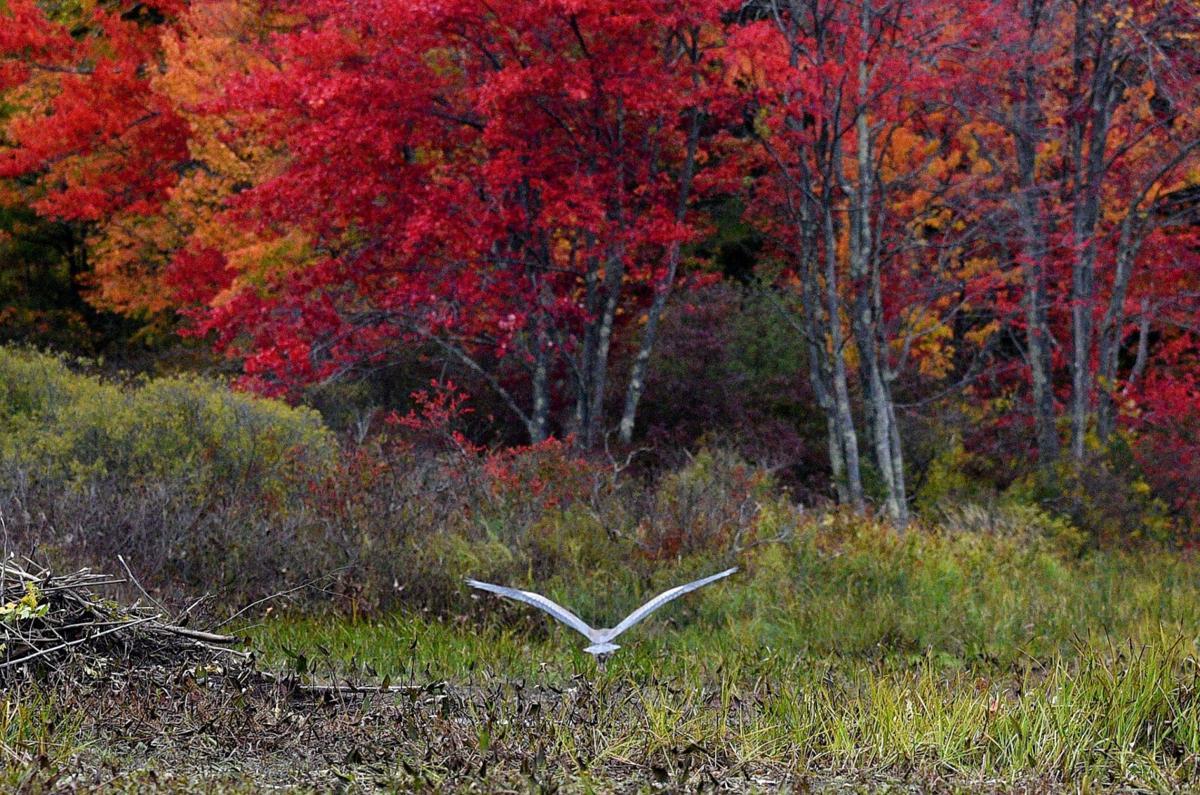 191011-news-fall-foliage-015_1389