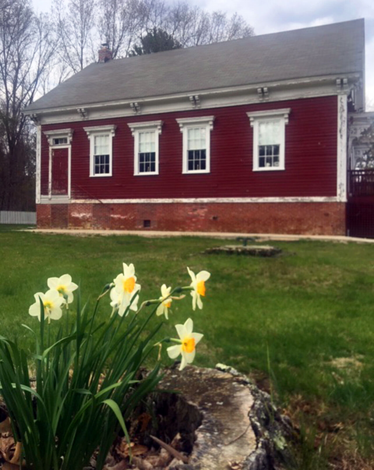 Daffodils outside the Forestdale Schoolhouse